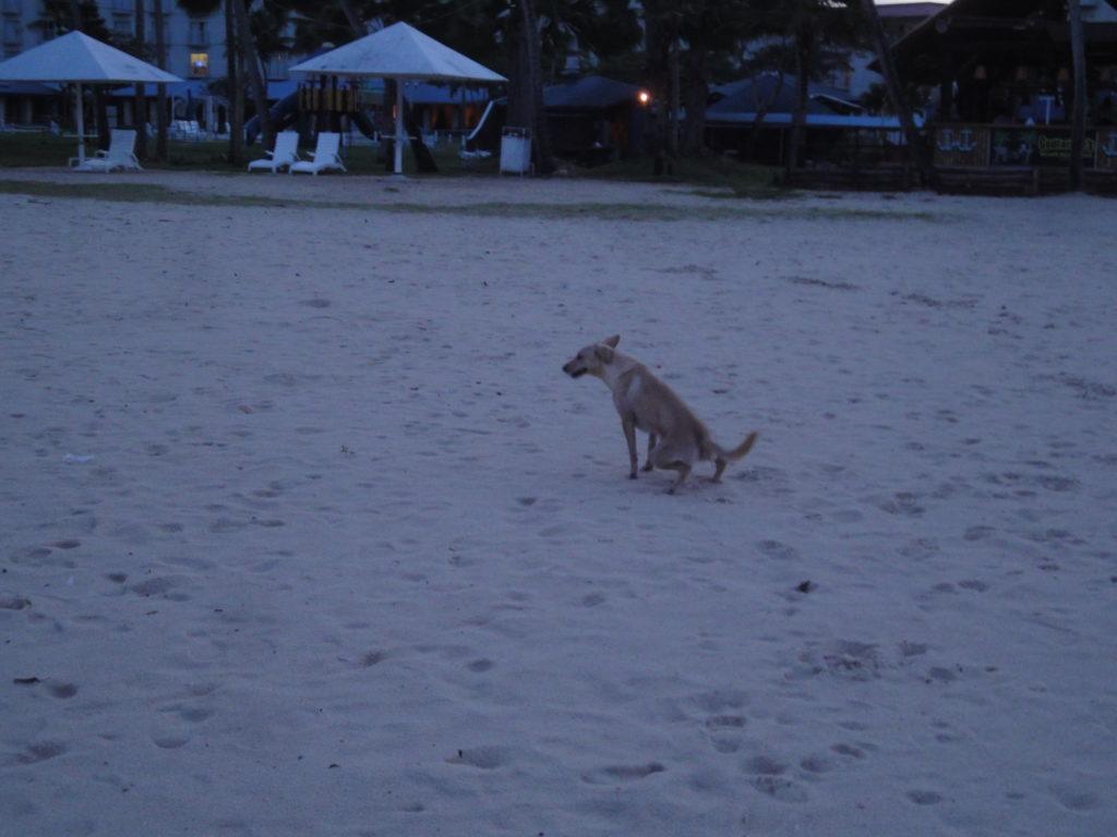 サイパンの海岸にいた犬